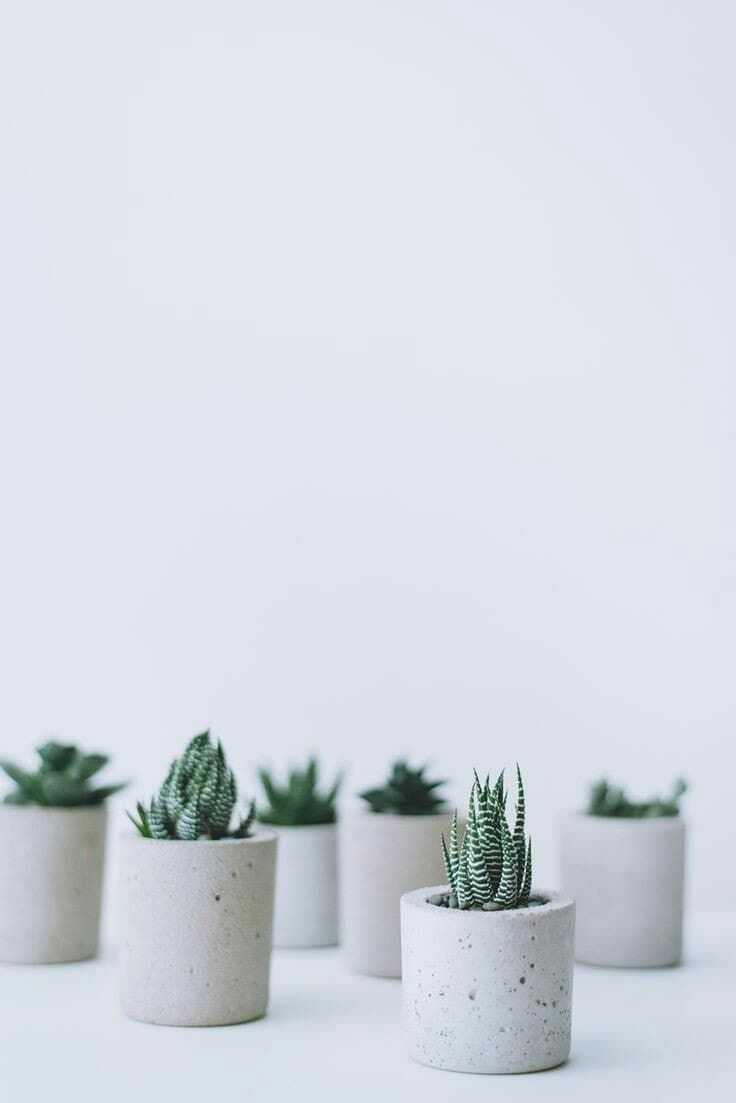 Aesthetic Wallpaper Aesthetic Wallpaper Cactus 3d Wallpapers Art Drawing Community Explore Discover The Best And The Most Inspiring Art Drawings Ideas Trends From All Around The World